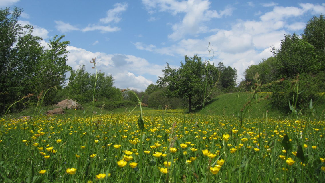 Alpe-Vicania-Prato-fiorito-2401-TW-Slideshow.jpg