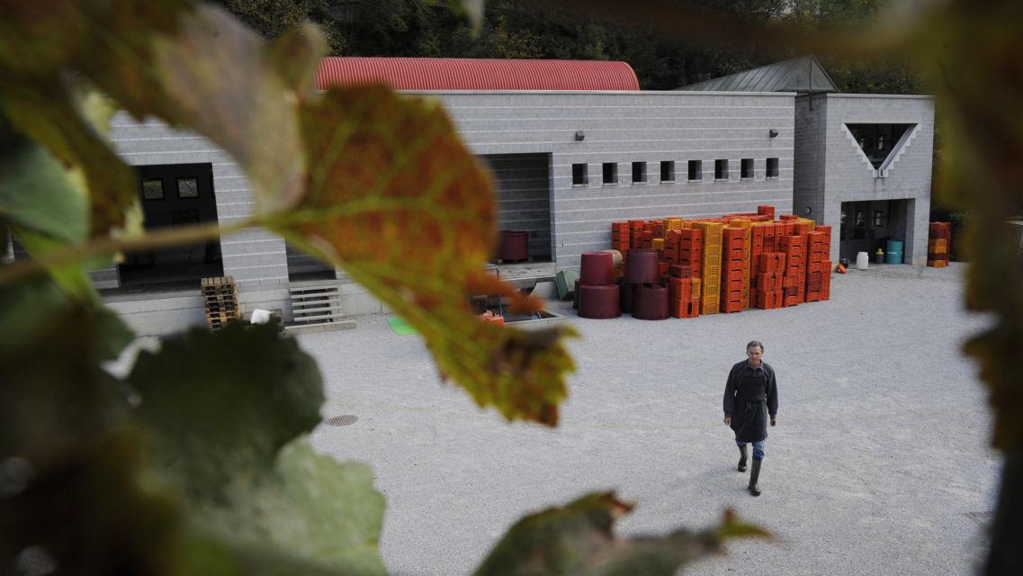 Cantina-Vini-Rovio-575-TW-Slideshow.jpg