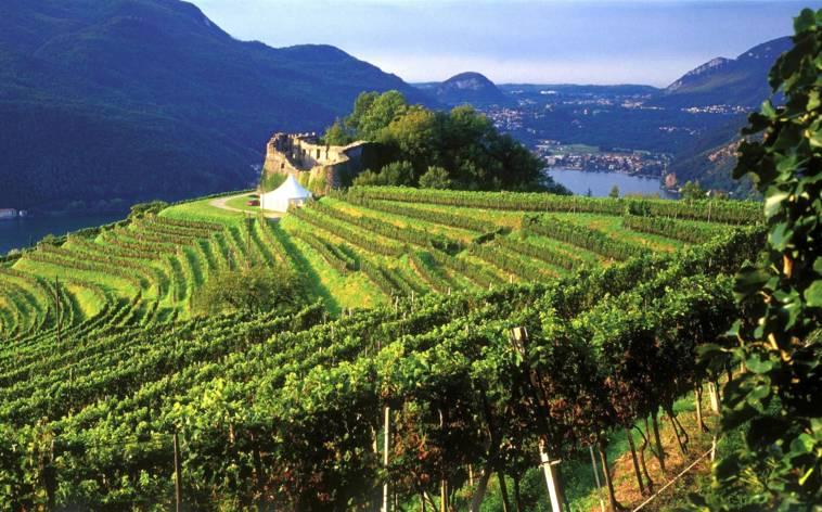 Castello-di-Morcote-VIgneti-874-TW-Interna.jpg