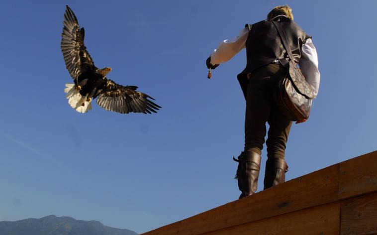Mit den Falken geht es himmelwärts