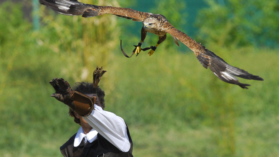 Falconeria-24281-TW-Slideshow.jpg