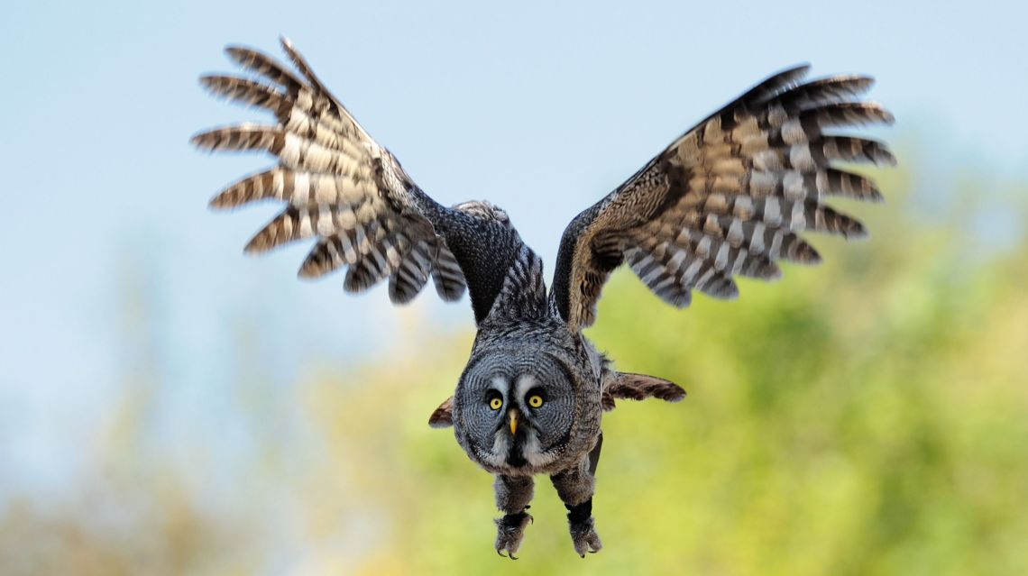 Falconeria-2460-TW-Slideshow.jpg