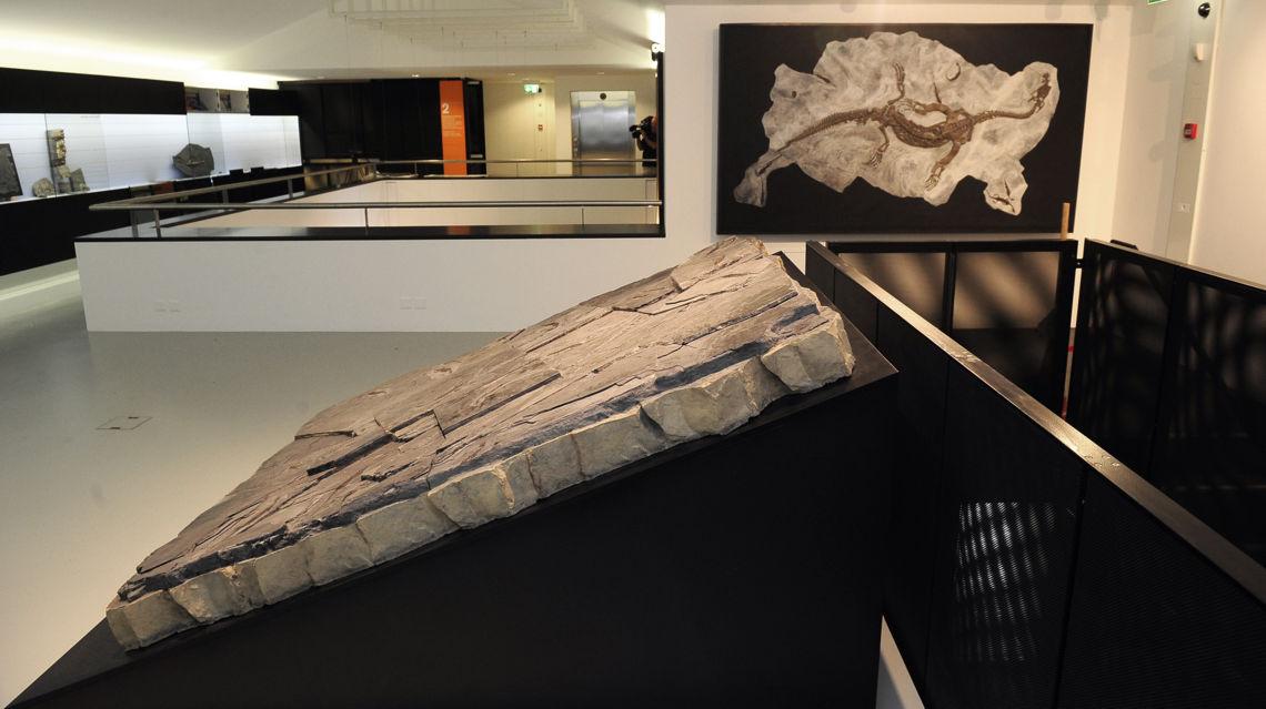 Meride-museo-dei-fossili-6460-TW-Slideshow.jpg