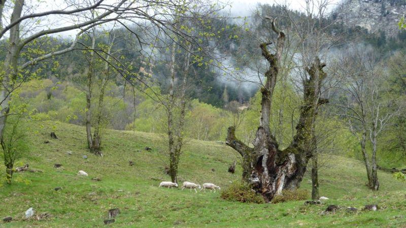 Mont-Grand-Soazza-26266-TW-Slideshow.jpg
