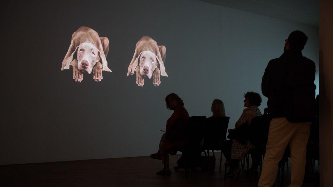 Mostra-William-Wegman-Being-Human-25054-TW-Slideshow.jpg