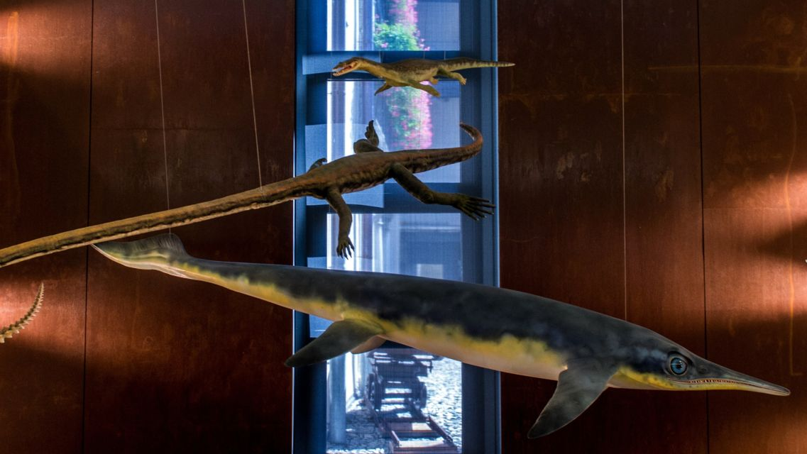 Museo-Fossili-M-San-Giorgio-17356-TW-Slideshow.jpg