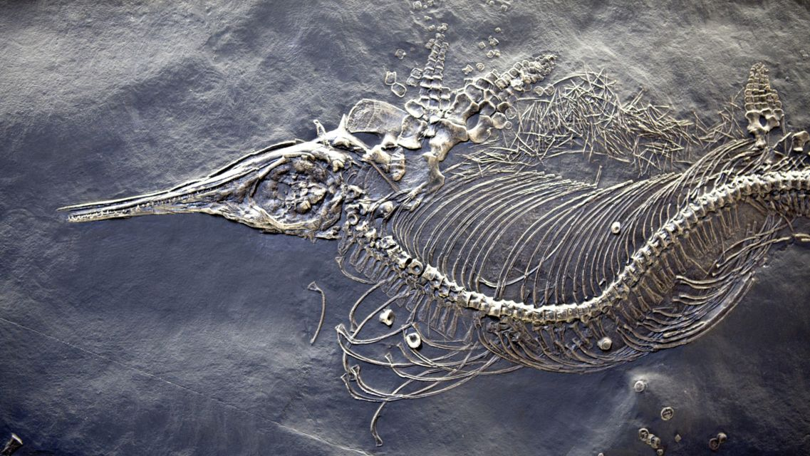 Museo-Fossili-M-San-Giorgio-24284-TW-Slideshow.jpg