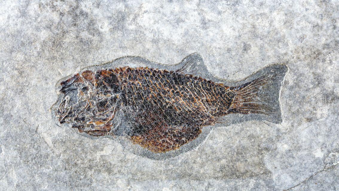 Museo-Fossili-M-San-Giorgio-27313-TW-Slideshow.jpg