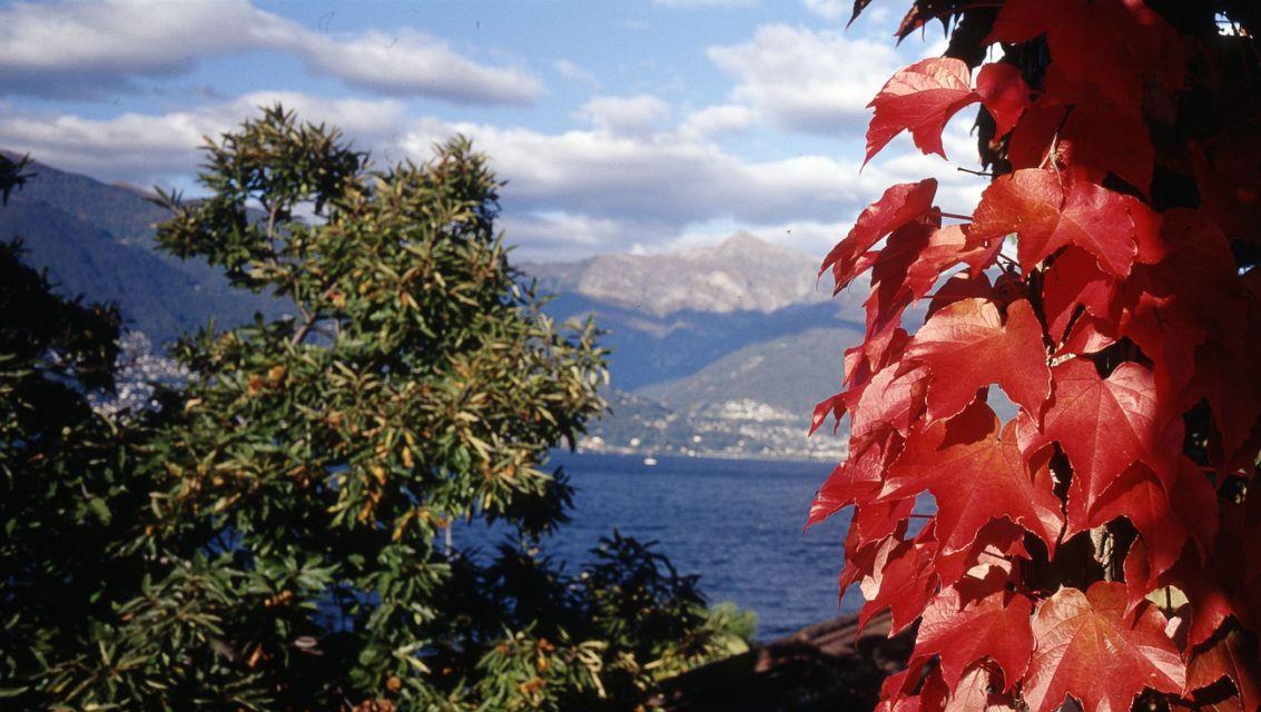 Natura-Foglie-d-autunno-20384-TW-Slideshow.jpg