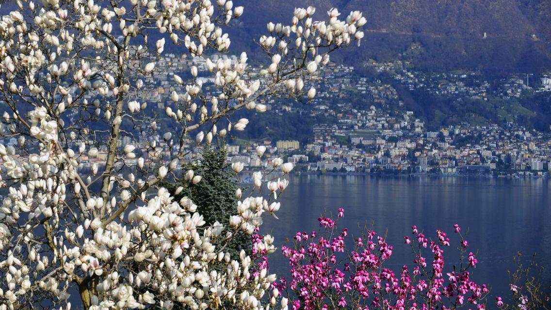 Parco-Botanico-del-Gambarogno-Magnolie-10789-TW-Slideshow.jpg