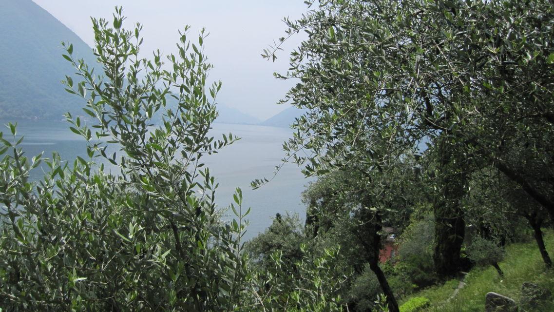 Parco-degli-Ulivi-19700-TW-Slideshow.jpg