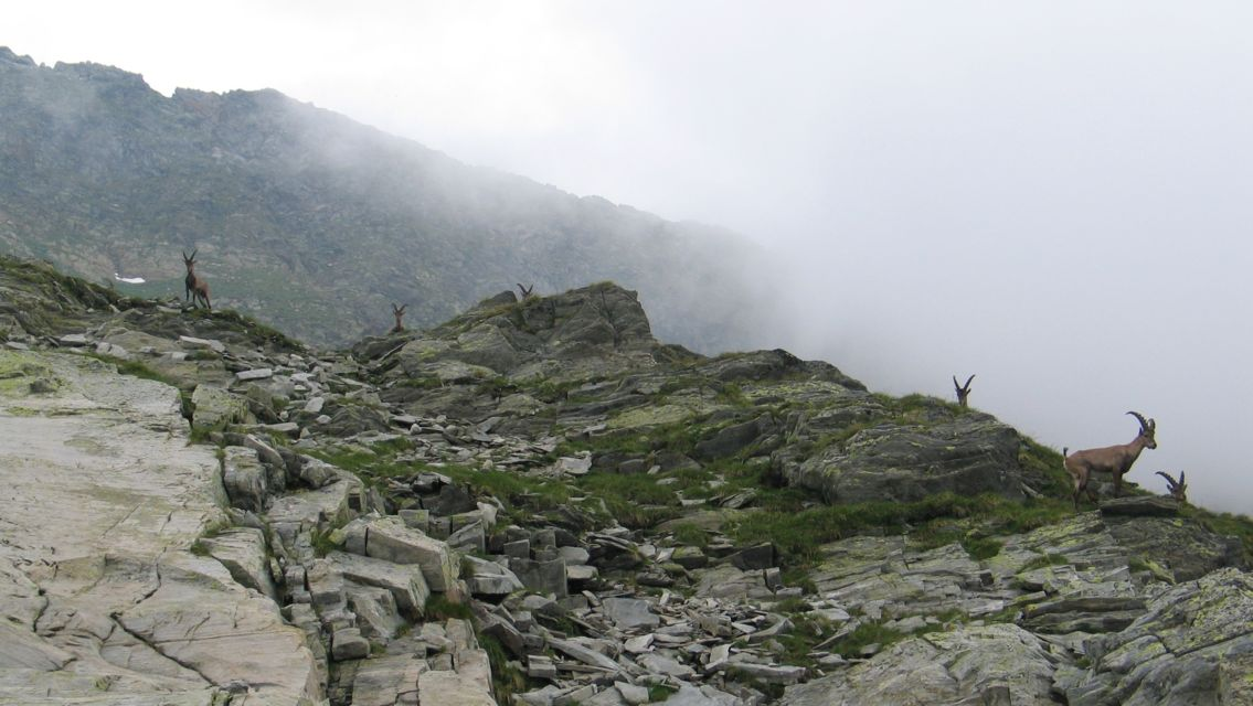 Parco-regionale-Calanca-26254-TW-Slideshow.jpg