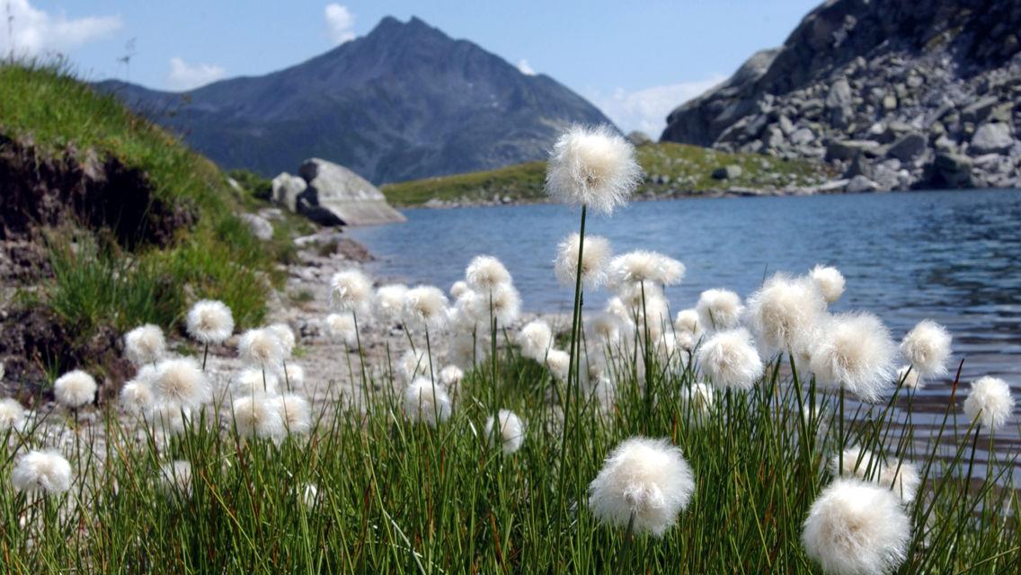 Passo-del-San-Gottardo-Laghetto-D-Orsino-fiori-8107-TW-Slideshow.jpg