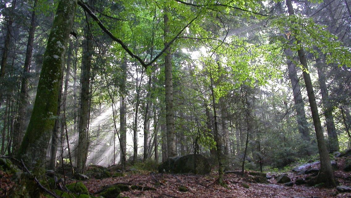 Riserva-Forestale-Val-Cama-Leggia-15643-TW-Slideshow.jpg