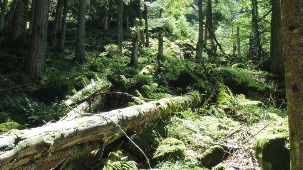 Riserva-Forestale-Val-Cama-Leggia-19264-TW-Slideshow.jpg