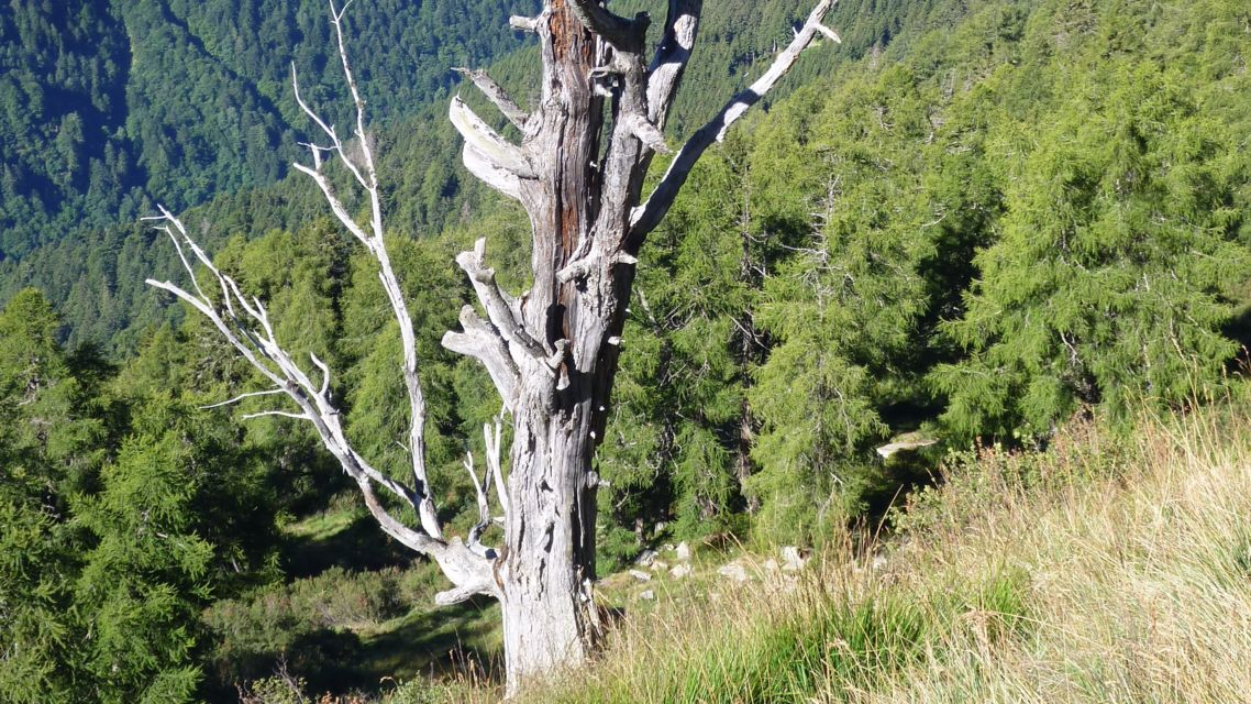 Riserva-Forestale-Val-Cama-Leggia-Grono-19340-TW-Slideshow.jpg