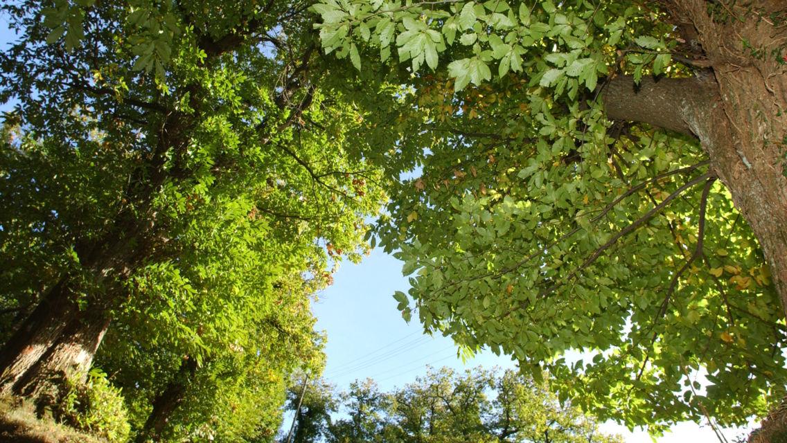 Selva-Castanile-17159-TW-Slideshow.jpg