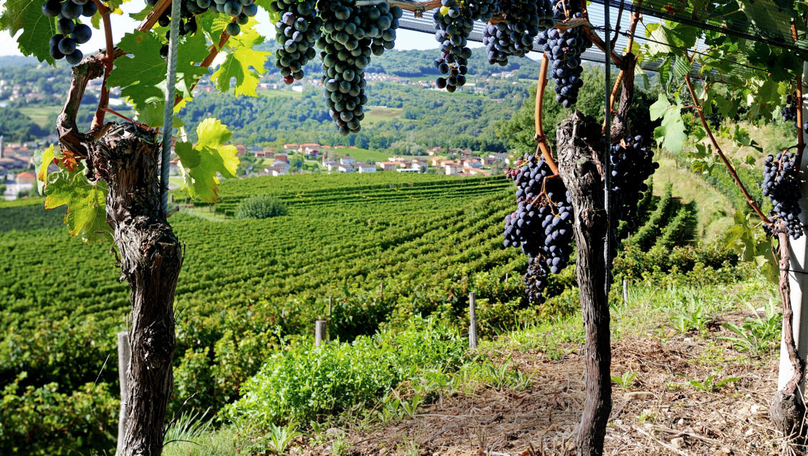 Sentieri-Viticoli-Montalbano-3875-TW-Slideshow.jpg