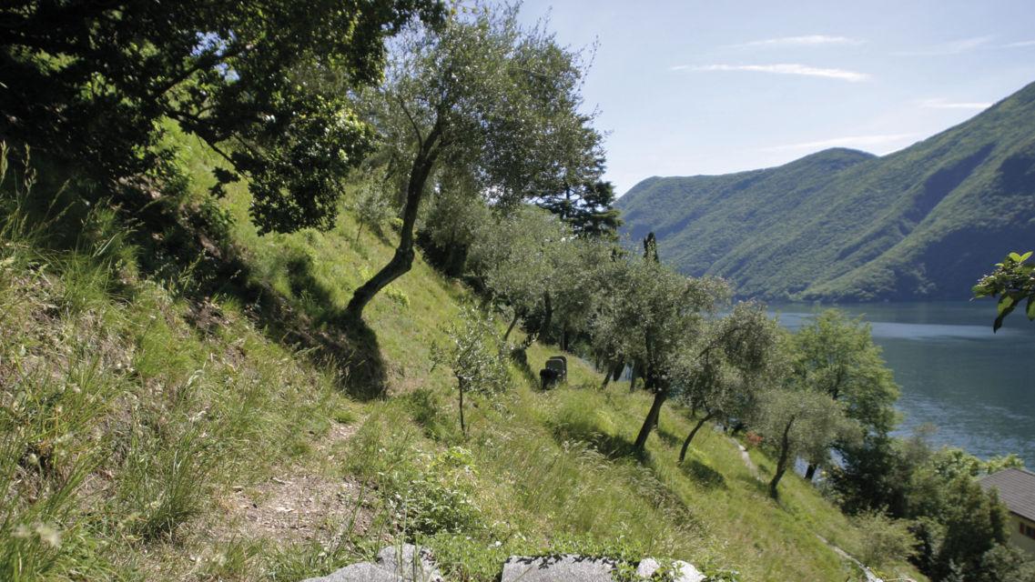 Sentiero-degli-ulivi-14535-TW-Slideshow.jpg