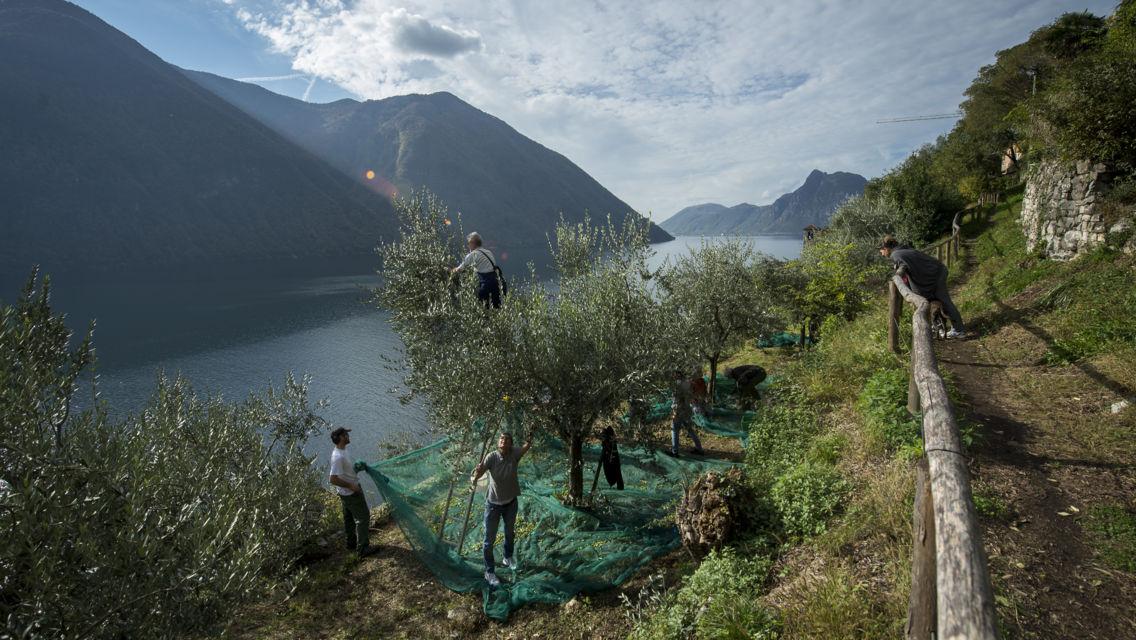 Sentiero-degli-ulivi-19704-TW-Slideshow.jpg