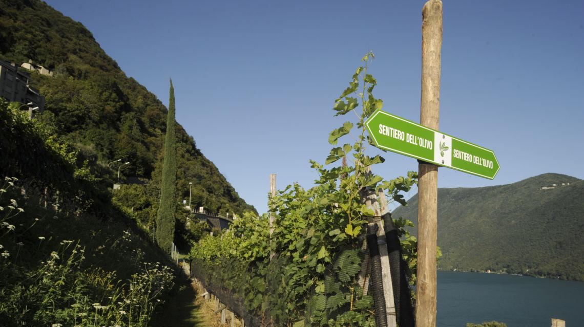 Sentiero-dell-ulivo-1927-TW-Slideshow.jpg