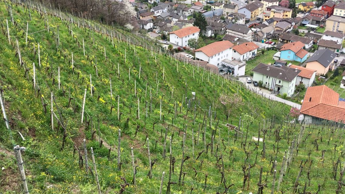 Sentiero-vigne-attorno-a-Gordola-21515-TW-Slideshow.jpg