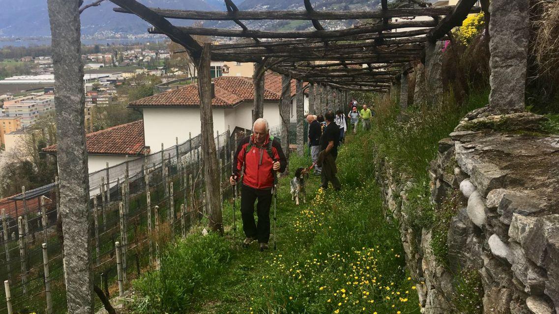 Sentiero-vigne-attorno-a-Gordola-21516-TW-Slideshow.jpg