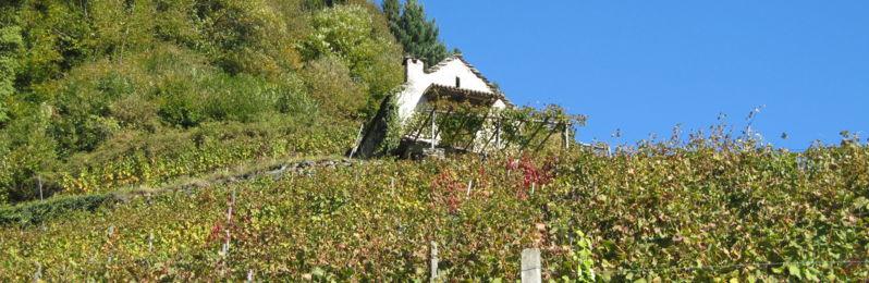 Via-delle-vigne-27677-TW-proposta-1.jpg