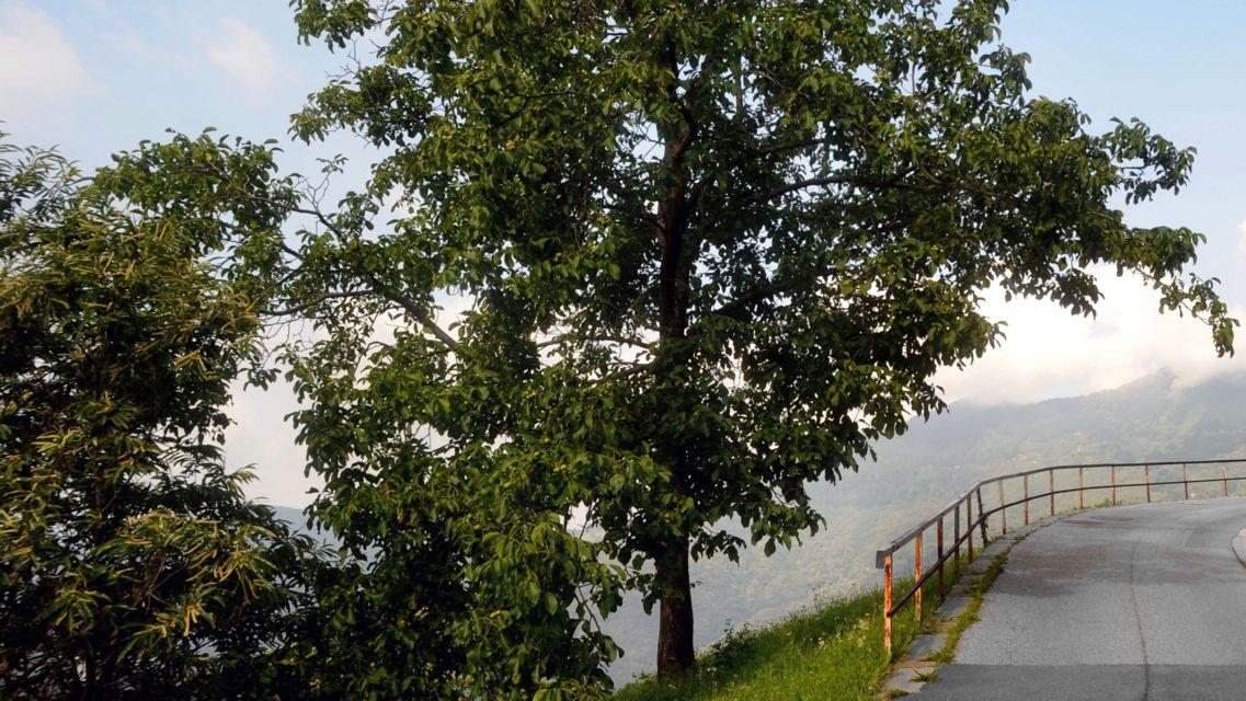 albero-di-noci-11894-TW-Slideshow.jpg