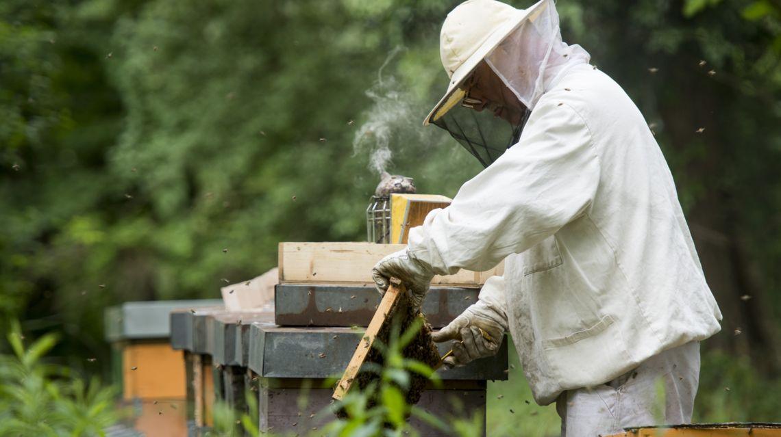 apicoltura-miele-23690-TW-Slideshow.jpg