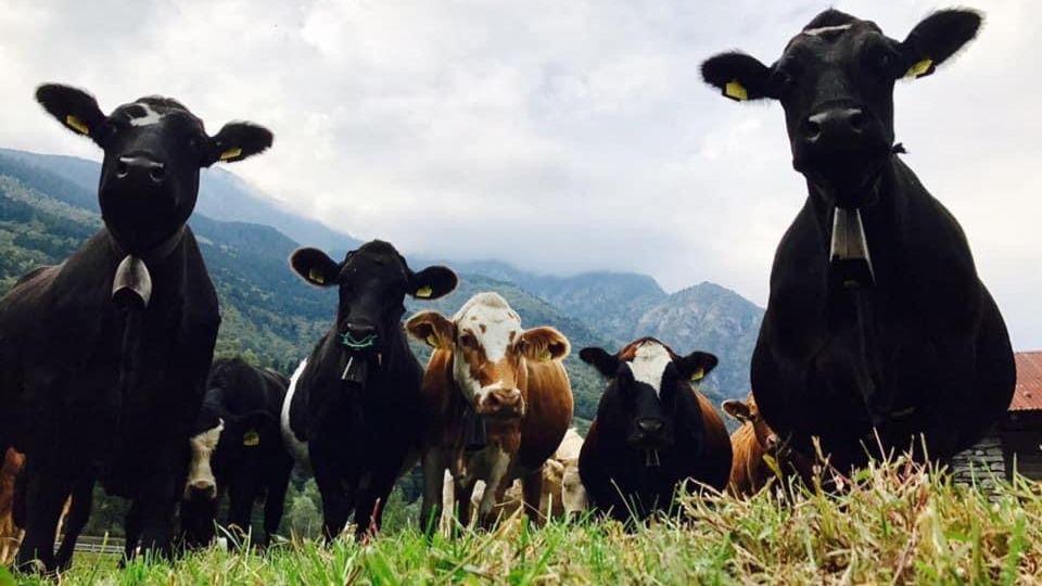 azienda-agricola-Gianella-26312-TW-Slideshow.jpg