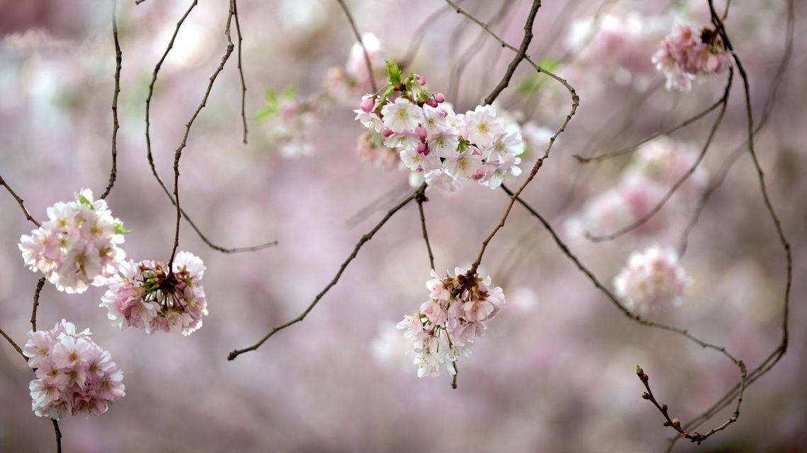 fioritura-di-primavera-18407-TW-Slideshow.jpg