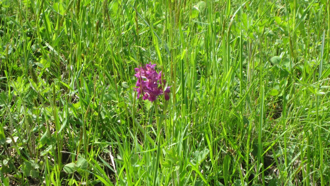 flora-alpina-18285-TW-Slideshow.jpg