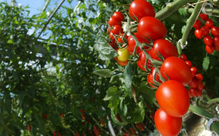 frutta-e-verdura-27808-TW-Interna.jpg