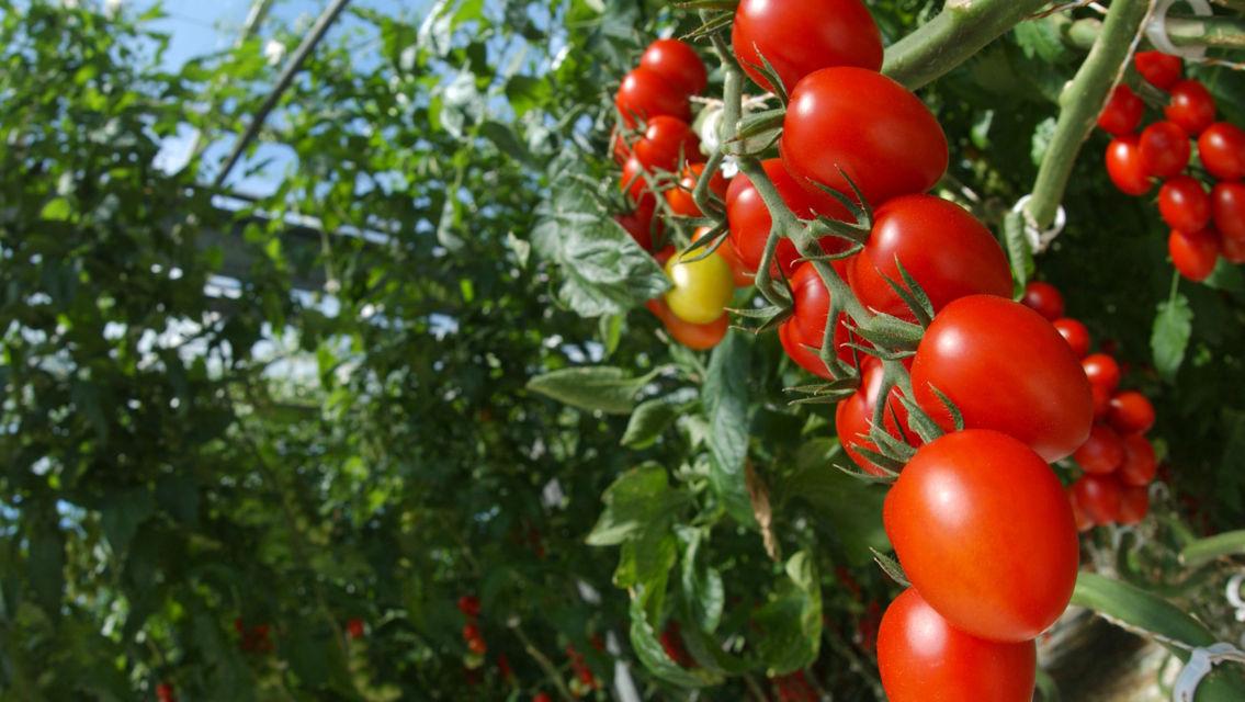 frutta-e-verdura-7771-TW-Slideshow.jpg