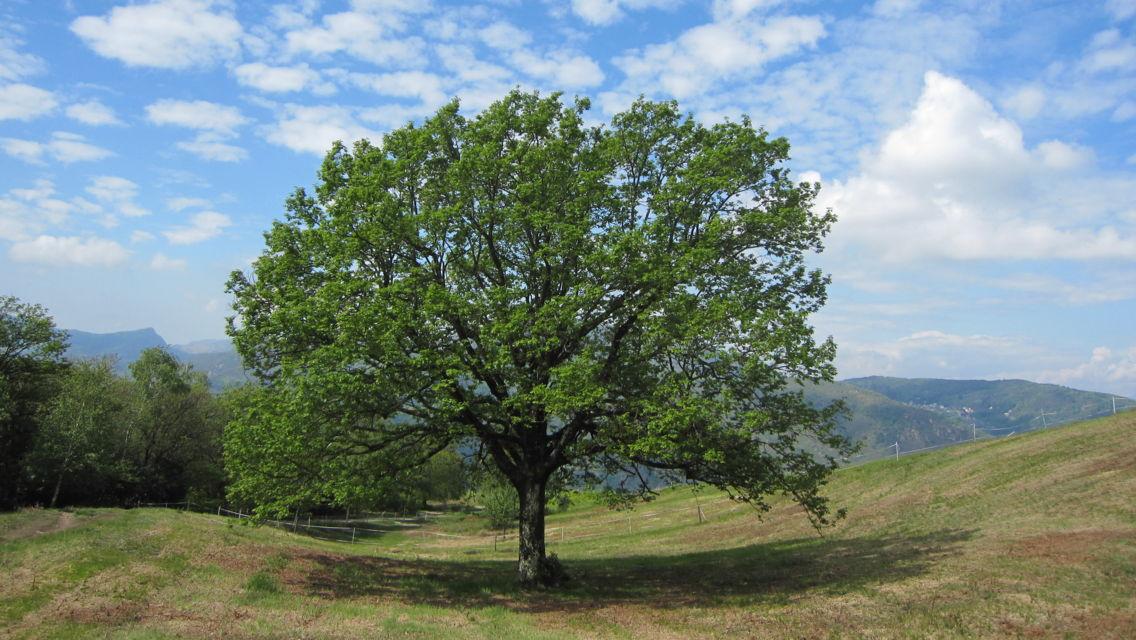 gita-Carona-alpe-Vicania-Morcote-868-TW-Slideshow.jpg