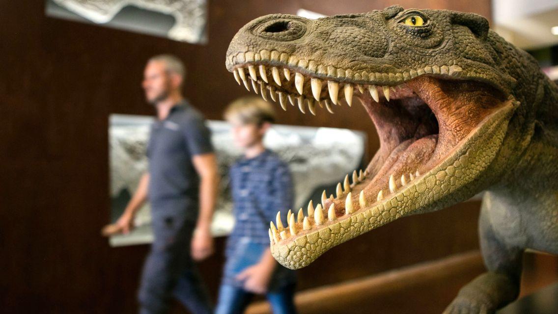 museo-dei-fossili-27314-TW-Slideshow.jpg