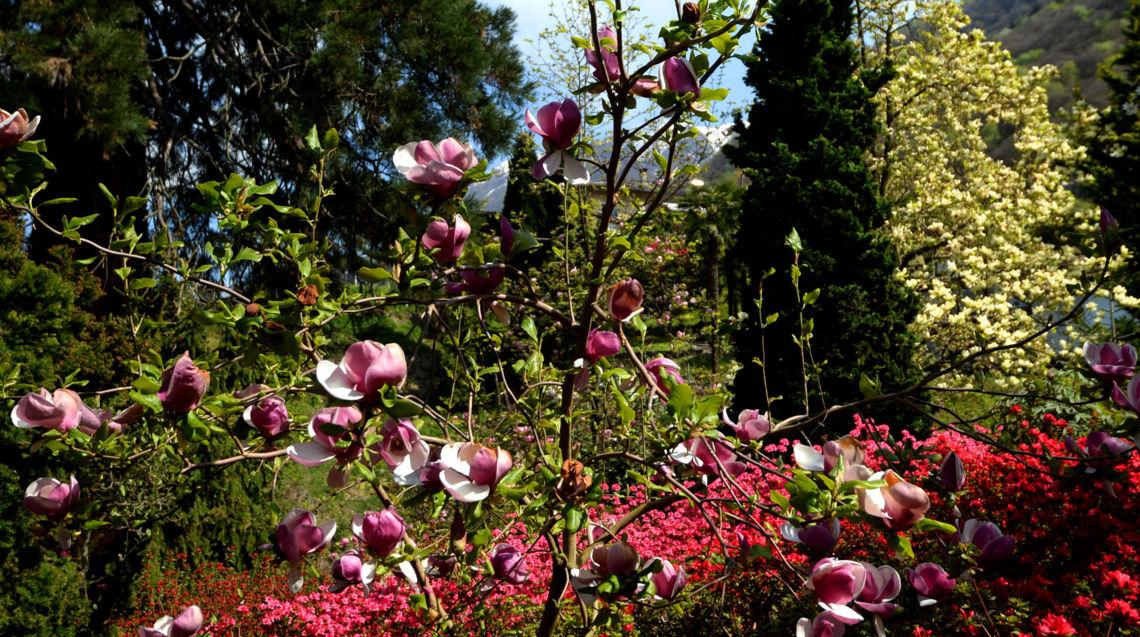 parco-botanico-Gambarogno-10787-TW-Slideshow.jpg