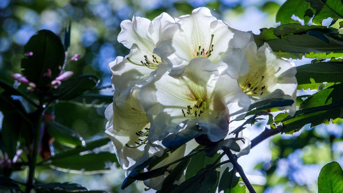 parco-botanico-Gambarogno-18298-TW-Slideshow.jpg