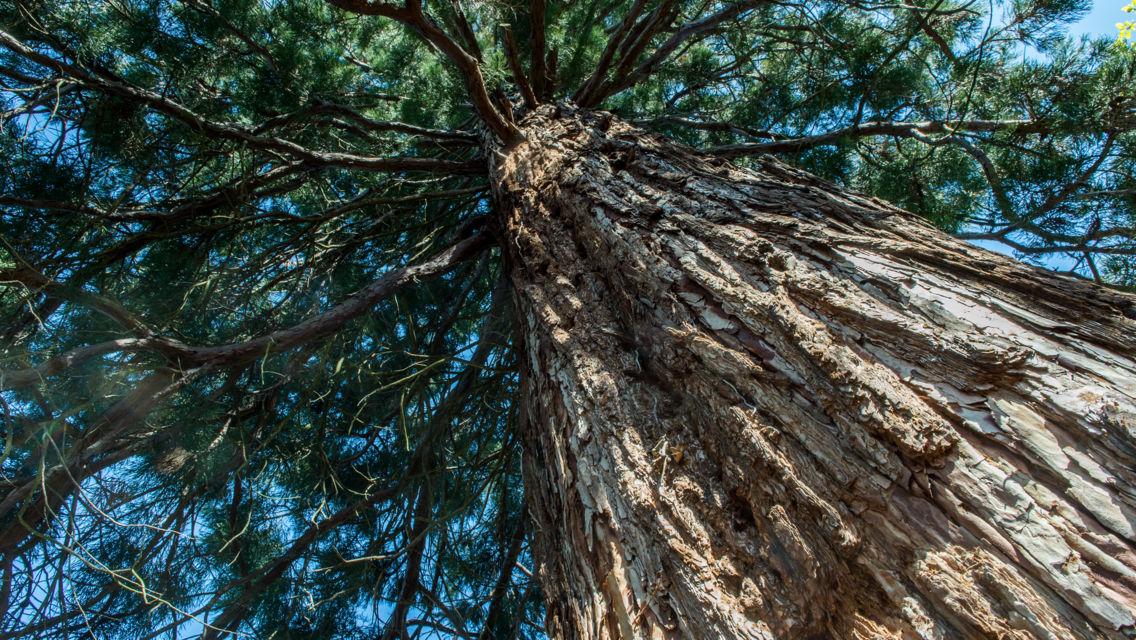 parco-botanico-Gambarogno-18301-TW-Slideshow.jpg