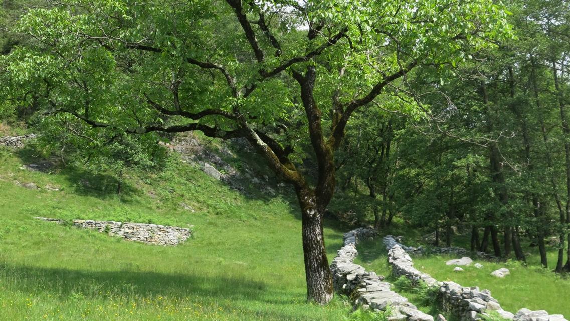 sentiero-in-Vallemaggia-14586-TW-Slideshow.jpg
