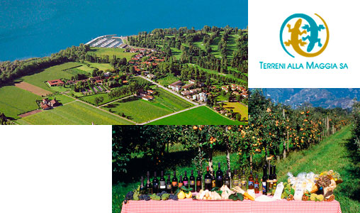 Wettbewerb Terreni alla Maggia Produkte