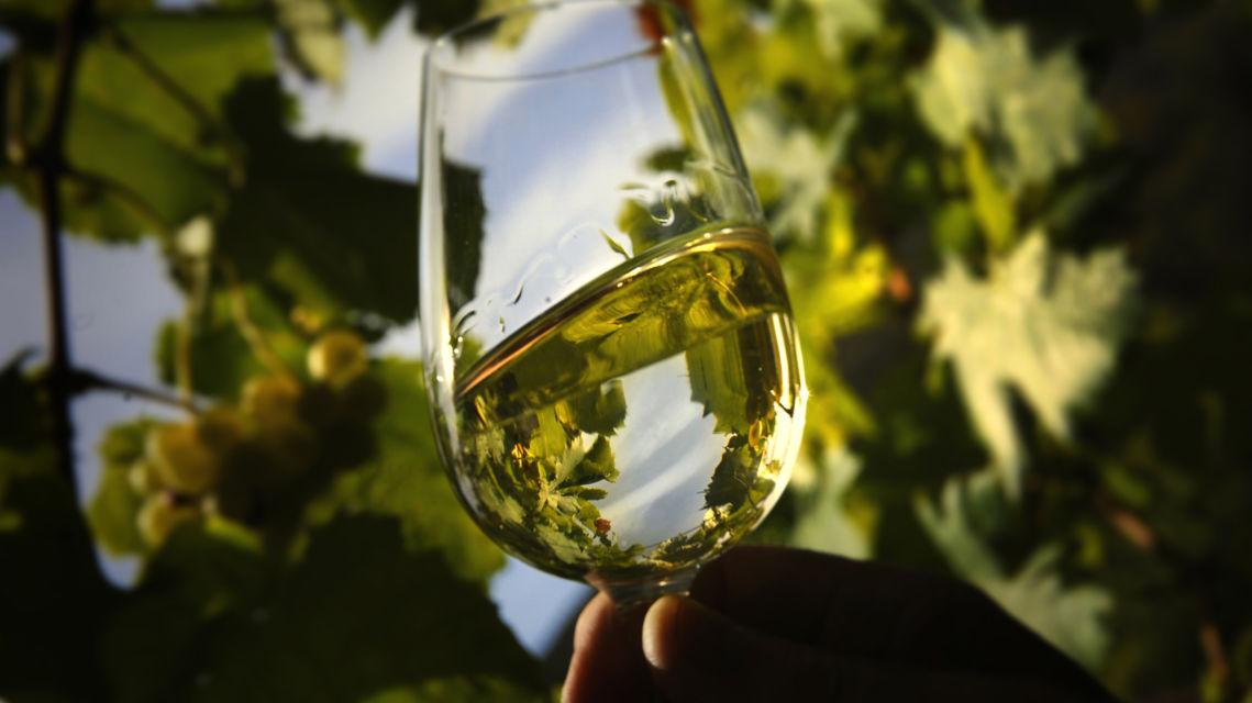 un-bicchiere-di-vino-bianco-in-un-vigneto-12038-TW-Slideshow.jpg