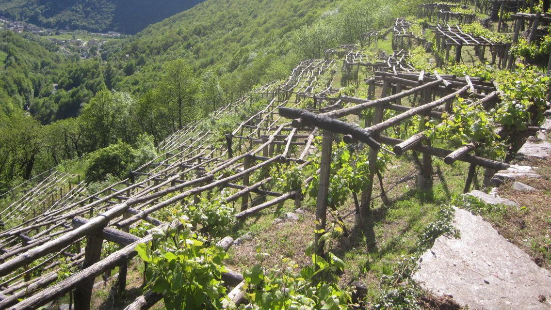 vigneti-terrazzati-a-Brontallo-11751-TW-Slideshow.jpg